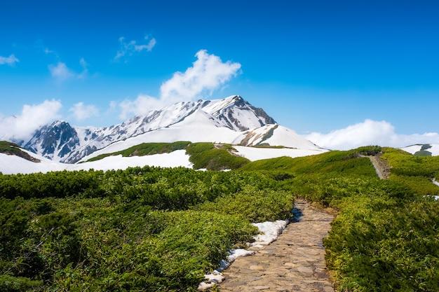 Chaussée avec champ vert et montagne enneigée avec ciel bleu