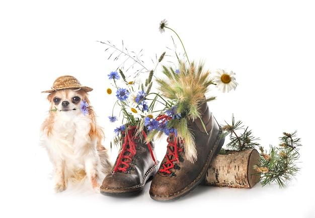 Chaussures de randonnée en face de fond blanc