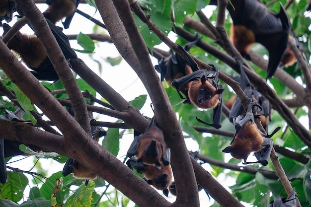 Chauve-souris accrochée à l'arbre