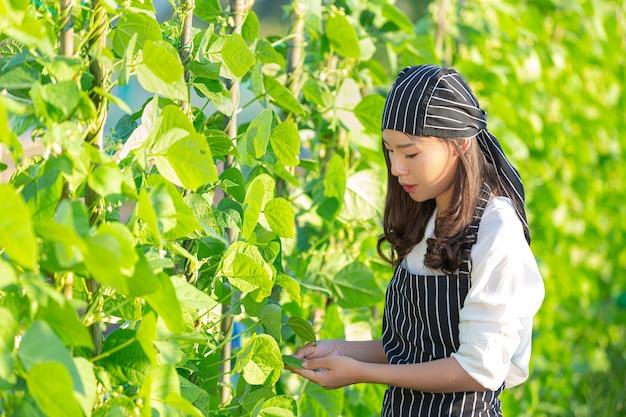 Chef de récolte de produits frais hors ferme biologique