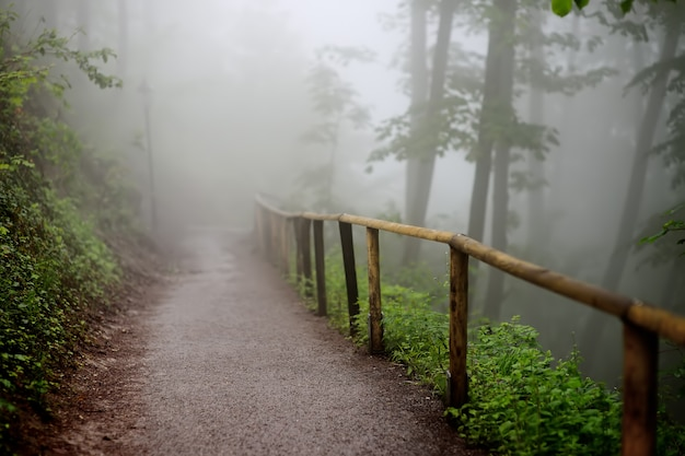Chemin d'accès avec une clôture en bois qui traverse une forêt mystérieuse brumeuse et sombre