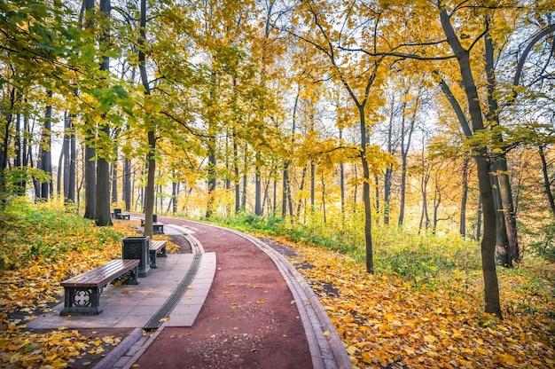 Chemin et banc dans le parc tsaritsyno à moscou parmi les arbres d'automne dorés dans les rayons du soleil du matin d'automne