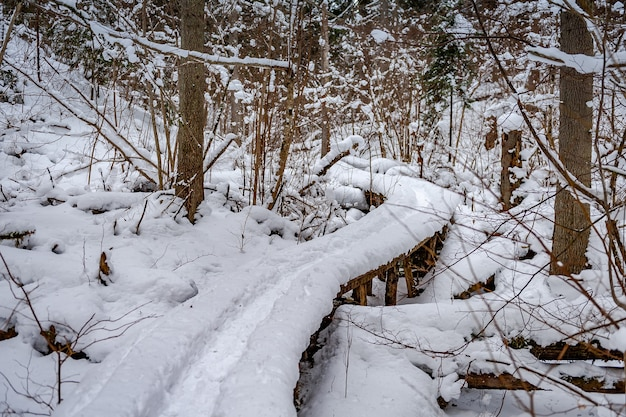 Chemin en bois à travers la forêt couverte de neige lettonie baltique