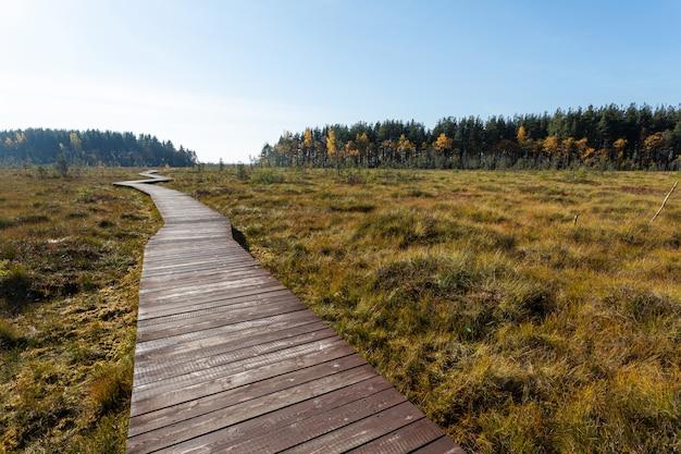 Chemin en bois traversant la tourbière jaune au début de l'automne.