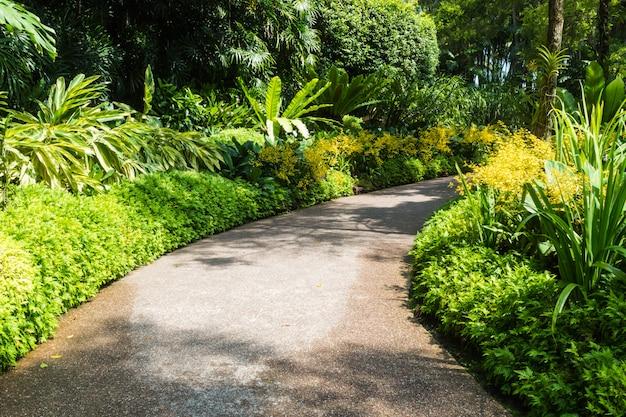 Chemin avec un cadre d'orchidées jaunes