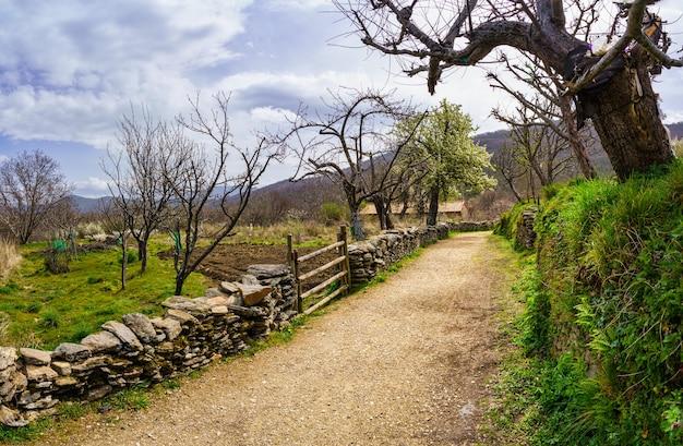 Chemin à la campagne entre vergers agricoles et arbres en fleurs au printemps