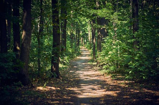 Chemin chemin dans la forêt ensoleillée d'été. mise au point sélective