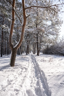 Chemin de congères dans la forêt après une énorme tempête de neige