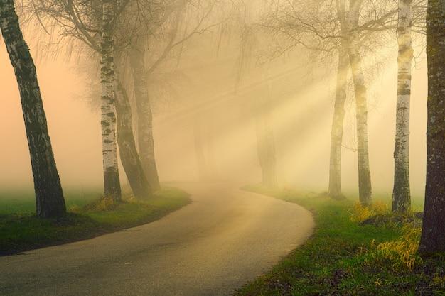 Chemin dans les bois brumeux