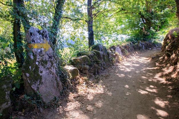 Chemin dans les bois