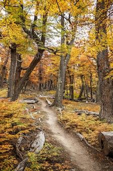 Chemin dans une forêt d'automne colorée
