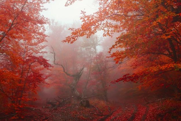 Chemin dans la forêt dorée d'automne