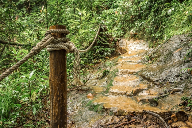Chemin dans la forêt tropicale