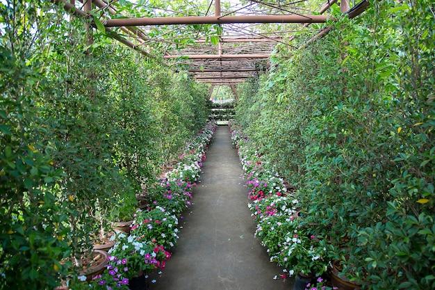 Chemin dans un jardin tropical