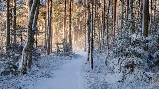 Chemin dans la neige fraîche dans une forêt d'hiver après une chute de neige