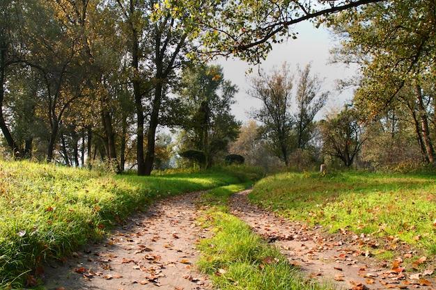 Chemin dans un parc