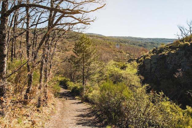 Chemin dans un paysage vallonné