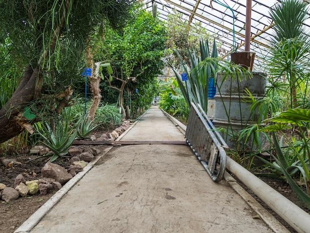 Chemin dans la serre avec des plantes tropicales. objets pour le nettoyage et l'arrosage des plantes. toit en verre