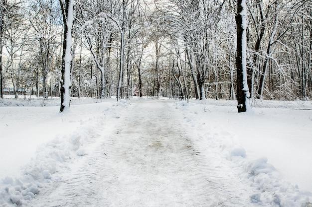 Chemin enneigé dans plusieurs arbres dans une forêt