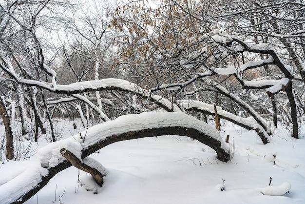 Chemin enneigé entre les branches des arbres dans un parc se bouchent.