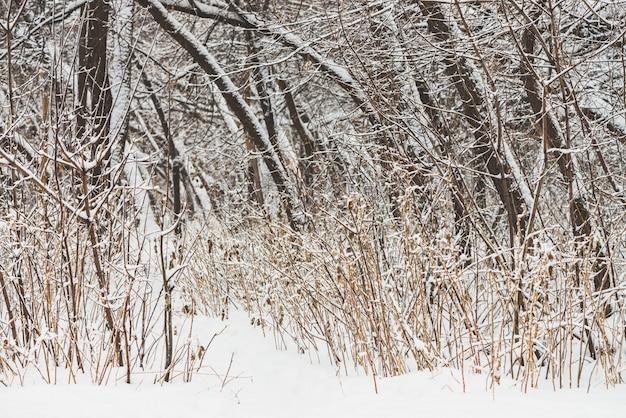 Chemin enneigé parmi les branches des arbres dans un parc