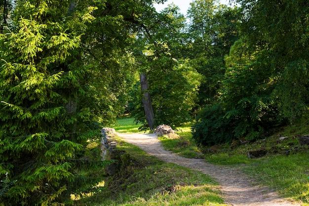 Chemin ensoleillé et pont de pierre dans la forêt pittoresque