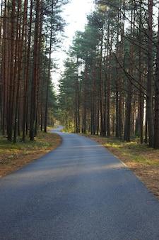 Le chemin est courbé par un serpent et va au loin dans une belle forêt de pins en automne.