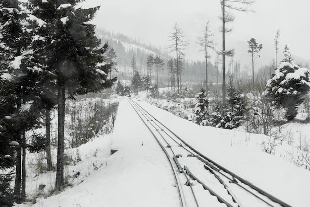 Chemin de fer dans la forêt d'hiver à feuilles persistantes