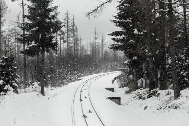 Chemin de fer dans la forêt d'hiver