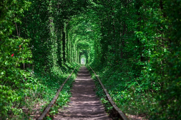 Un chemin de fer dans la forêt de printemps tunnel d'amour