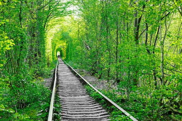 Un chemin de fer dans le tunnel de l'amour de la forêt printanière
