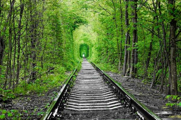 Un chemin de fer dans le tunnel de la forêt printanière de l'amour