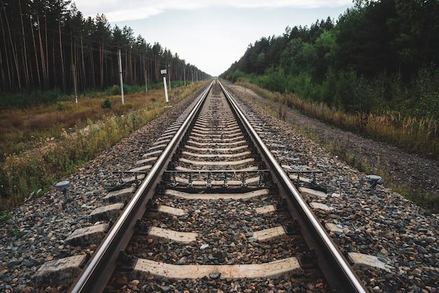 Chemin de fer voyageant en perspective à travers la forêt.