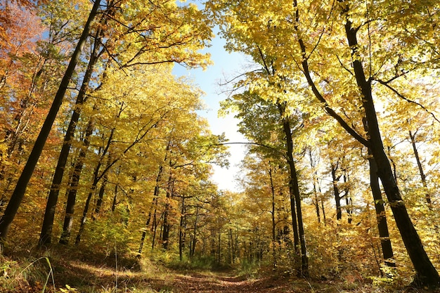 Chemin forestier parmi les chênes sur un matin d'automne ensoleillé