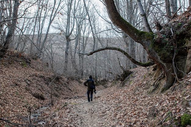 Chemin en forêt avec d'énormes arbres au crépuscule en hiver