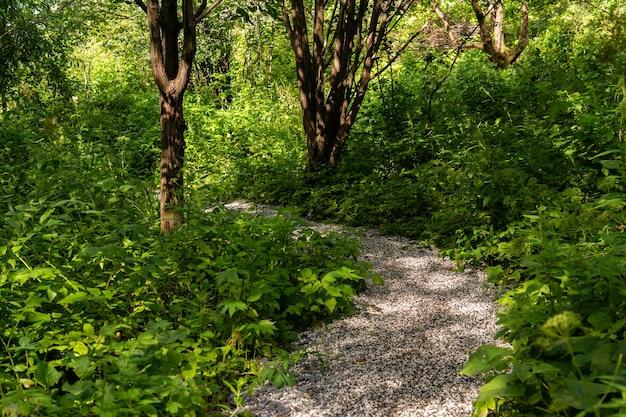 Chemin de gravier parmi les fourrés dans un parc d'été avec des saules