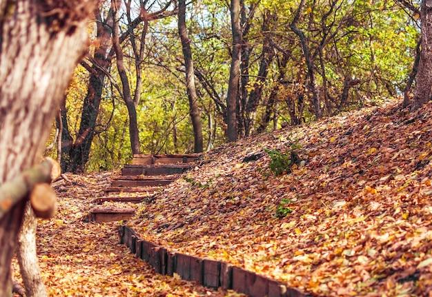 Chemin et marches dans la forêt d'automne par une journée ensoleillée