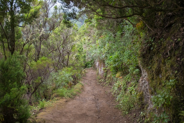 Chemin menant à chinamada, massif d'anaga, tenerife.