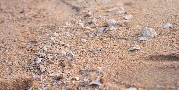 Un chemin de petits coquillages traverse le sable. la lumière du soleil illumine le chemin.
