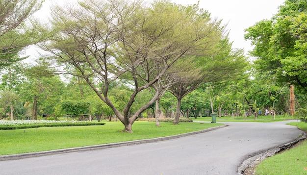 Chemin à pied dans le jardin du parc public suan luang rama ix bangkok thaïlande fond