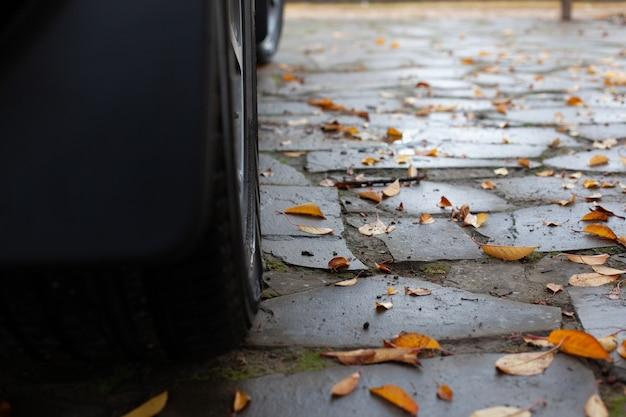 Chemin de pierre dans l'arrière-cour recouvert de feuilles d'automne humides jaunes en gros plan