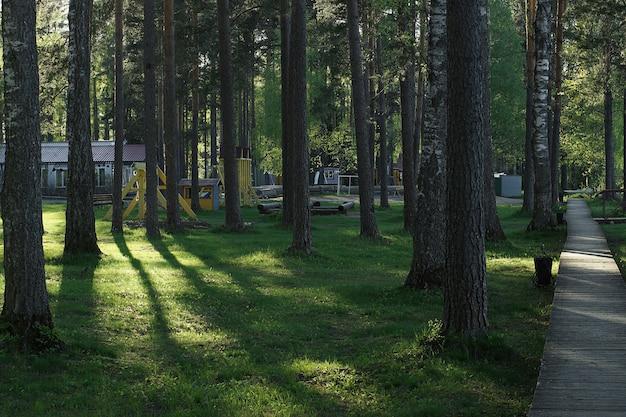 Un chemin de promenade est aménagé dans une forêt de pins.