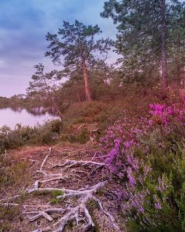Chemin avec des racines et des fleurs le long d'un lac forestier un soir d'été.
