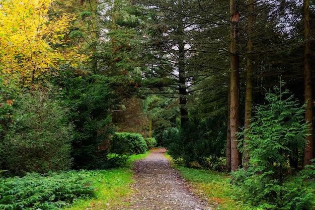 Chemin rocheux dans une forêt mixte après la pluie.