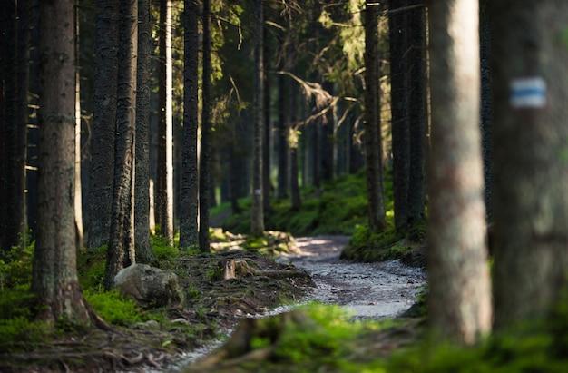 Chemin de sentier forestier