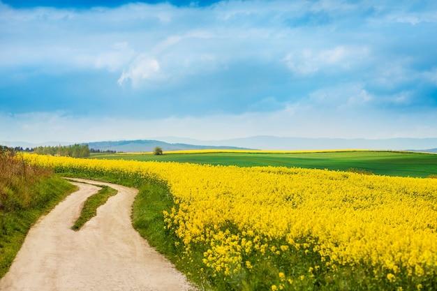 Chemin de terre à côté de champs de colza en fleurs