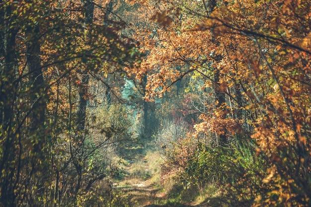 Chemin de terre dans la forêt d'automne avec des branches qui pendent