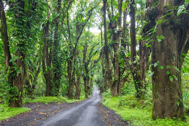 Chemin de terre dans la jungle à distance à big island, hawaii