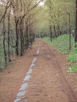 Sur le chemin de terre entrant dans le village le long de la route se trouve une forêt de pins