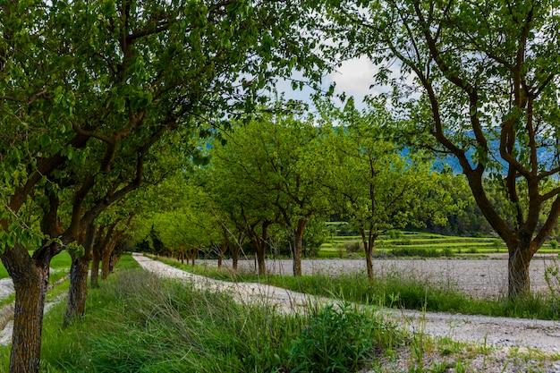 Chemin de terre entre les mûriers verts entre les prés.